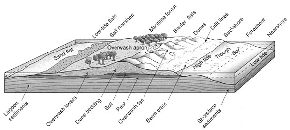 Cross-section of a typical barrier island